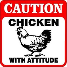Chicken With Attitude Sign from My Pet Chicken