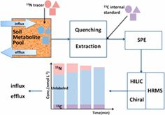 Flux Analysis of Free Amino Sugars and Amino Acids in Soils by Isotope Tracing with a Novel Liquid Chromatography/High Resolution Mass…