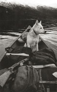 I would love to do this with a dog. Just kayak down a river in canada.