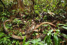 Tropical rainforest sumatra