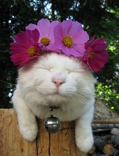 cats with flowers on head Crazy Cat Lady, Crazy Cats, I Love Cats, Cool Cats, Exotic Cats, Cat Flowers, Cat Hat, Here Kitty Kitty, White Cats