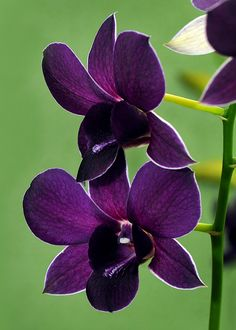 Here's what we found about purple flowers. Read up the info about purple flowers, and learn more about it! Exotic Flowers, Amazing Flowers, Purple Flowers, Beautiful Flowers, Purple Orchids, Orchid Flowers, Orchid Bouquet, Orchid Tree, Trees To Plant