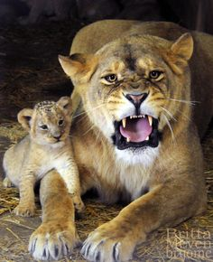 Don't mess with a momma and her cub!