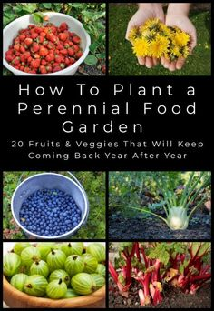Plant these fruits and veggies once and harvest their delicious bounty for years and years. This is the perfect set-and-forget edible garden!