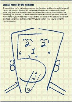 "Cranial Nerves by number: by Barbara Bolek [click PDF link in article to access diagram]. Nice visual adjunct to the verbal mnemonics for the names: ""Old Opie Occasionally Tries Trigonometry And Feels Very Gloomy, Vague And Hypoactive""; and for the type (Sensory or Motor or Both) - ""Some Say Marry Money, But My Brother Says Big Brains Matter Most"""