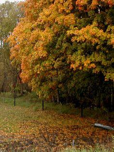 Autumn in my world - Iowa