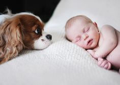 sweet portrait of a newborn baby girl and her dog