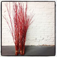 Where and how to harvest red twig dogwood stems for holiday decor - Foraged, from the garden and purchased locally. Red Twig Dogwood, Christmas Planters, Garden Inspiration, Garden Ideas, Garden Projects, Willow Branches, Branch Decor, Autumn Garden, Noel