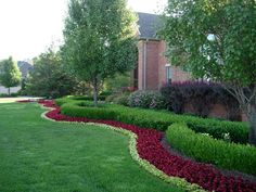 michigan landscaping -\    Add hedge around evergreens in front yard?