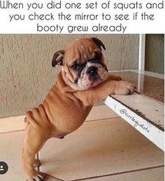#booty #bigbooty #bulldog #puppy #fitness #fitnessmotivation #custom #customworkout #onlinefitness #onlinefitnesstrainer #primalmovement #mydfit
