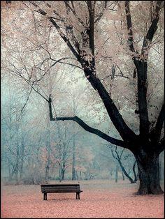 pure winter