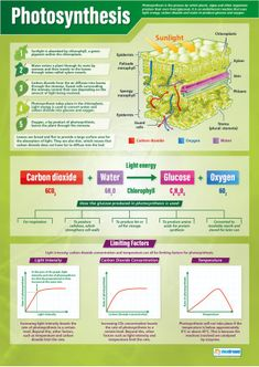 Our Photosynthesis Poster is part of our Science series. This colorful and engaging poster explains in great detail how plants, algae, and other organisms produce their own food through the process known as Photosynthesis. Gcse Biology Revision, Science Revision, Gcse Science, Science Notes, Plant Science, Science Biology, Science Experiments Kids, Science Lessons, Science For Kids