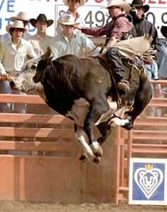 Reindeer Dippin, sire of Bushwacker.it's time for a rodeo A couple of these bulls names I remember. They were awesome for the cowboys to try to ride. Rodeo Cowboys, Real Cowboys, Cowgirl And Horse, Cowboy Art, Bucking Bulls, Rodeo Events, Professional Bull Riders, Rodeo Life, Bull Riding