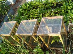 """Mini portable """"greenhouses""""--it says they're less than six dollars each to make."""