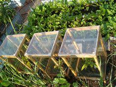 Mini greenhouses.