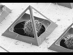 Energía Piramidal y Electromagnetismo en la Terapéutica - YouTube