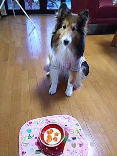 Special pupcake