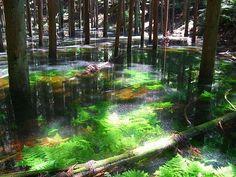 幻の池 浜松市天竜区水窪・池の平