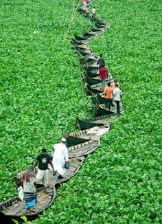 Bangladeshis being creative: a floating bridge made of canoes.