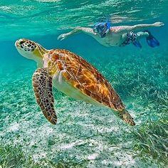 Sleep in the jungle, play at the beach. That's adventure Ka'ana style! #xoBelize