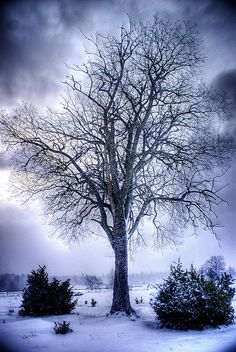 The first real snow came pretty early this year. This tree in the winter landscape is located near Björns Hög in Hågadalen, Uppsala. Snow Pictures, Jesus Pictures, Bonsai, Winter Love, Winter Snow, Winter Scenery, Adventures In Wonderland, Winter Beauty, Winter Landscape