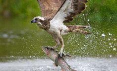 foto galeri,fotoğraf,dünya,hayvanlar alemi,yırtıcı kuşlar, 4