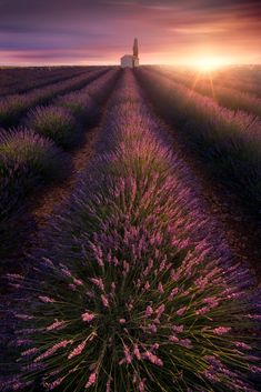 Back in Lavender time by Yuichi Sahacha- I just miss the warming sunlight and beautiful lavender field in Valensole, hope I can be there again this year. Lavender Fields, Lavender Flowers, Provence Lavender, Wild Flowers, Valensole, Best Sunset, Natural Scenery, Beautiful Scenery, France