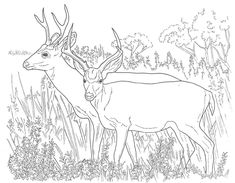 deer coloring pages free printable coloring pages