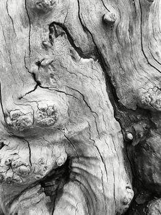 Deadwood / Kawah Putih - Jawa Barat