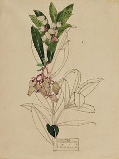 Charles Rennie Mackintosh - Arbutus