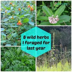 Feathers in the woods: 8 wild herbs I foraged this year