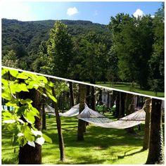 Sessiz, sakin, yemyeşil bir orman, masmavi, tertemiz, oksijen dolu bir gökyüzü…  NG Sapanca'da huzura hoş geldiniz! http://bit.ly/1R9Hwqq