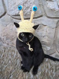 Snail Hat for Cat, Pet Snail Halloween Costume, Gift for Pet Lover, Crochet Snail Hat, Cats in Hats halloween hats Pet Halloween Costumes, Pet Costumes, Gifts For Pet Lovers, Cat Gifts, Kitten Accessories, Pet Snails, Cat Tent, Small Cat, Diy Stuffed Animals