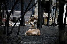 Approximately 500 homes just southeast of GEM's Monument headquarters burnt to the ground last week. Please pray for this community. (Black Forest Fire, June 17 | Colorado Springs Gazette)