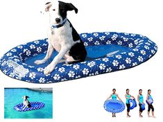 Dog Pool Float Swimways Float Paws Aboard Paddle Paws Pool Float for Dogs #SwimWays
