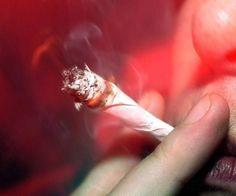 Cannabis ist eine Droge, die in großen Teilen der Welt illegal ist.