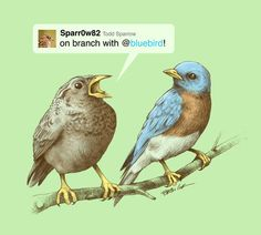 Dang that bird! Does he have to say EVERYTHING!? | Tweet  by Brian Cook