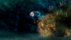 Dancing Octopus Wins Underwater Photographer of the Year (PHOTOS) | The Weather Channel