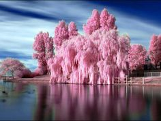 Pink, lovely