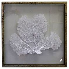"Featuring a delicate sea fan against a solid backdrop, this framed wall decor brings a coastal-chic touch to your breakfast nook or den.      Product: Framed wall decorConstruction Material: Sea fan, glass and woodColor: Brown frameFeatures:  Hand-paintedFloat mounted between glassReady to hang Dimensions: 23.25"" H x 23.25"" W x 1"" DCleaning and Care: Wipe with cloth"
