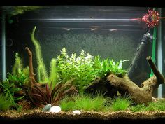 Freshwater Aquarium Design Ideas aquascaping designs as wonderful view for aquarium front view of small aquascaping designs idea from glass material aquariums pinterest models Betta Bits Plants For The Betta Tank Awesome Info Fish Aquarium Decorationsaquarium Ideasaquarium Designbetta