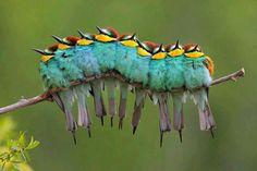 Keine Raupe... Aber ebenso wunderschöne Tiere!!