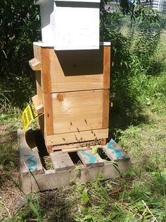 Photo by: Shawn Caza / CC: Attribution-NonCommercial-ShareAlike ... - Multiply your garden crop many times by keeping a hive of bees