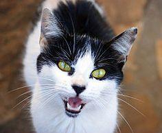Katzensprache ist komplex!