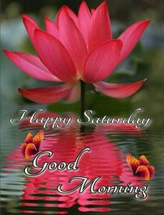Good Morning Gif, Good Morning Picture, Good Afternoon, Morning Pictures, Saturday Morning, Happy Weekend Quotes, Scripture Verses, Life Quotes, Night