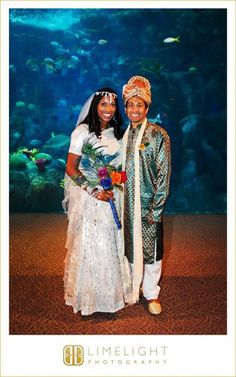 Limelight Photography, www.stepintothelimelight.com, Florida Aquarium, Tampa, Indian Wedding, bride, groom, white, green, red, bouquet, fish