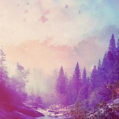 nature / landscape / trees / woodlands / forest / film / colour /Michal Mozolewski