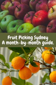 Fruit Picking Sydney Travel Articles, Travel Advice, Travel Ideas, Travel Inspiration, Travel Tips, Travel Destinations, Fruit Picking, Strawberry Picking, Travel With Kids