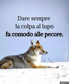 Motivational Words, Inspirational Quotes, Italian Language, Some Quotes, Sarcastic Quotes, Cute Love, Funny Images, Life Lessons, Favorite Quotes
