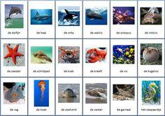 Themakaarten - zeedieren - groot Ocean Life, Strand, Octopus, School, Aquarium, Creatures, Projects, Cards, Animales